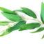 Eukaliptus w przemyśle farmaceutycznym i kosmetycznym
